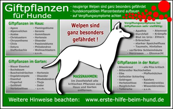 Hunde aus wissenswertes - Katzen giftige zimmerpflanzen bilder ...